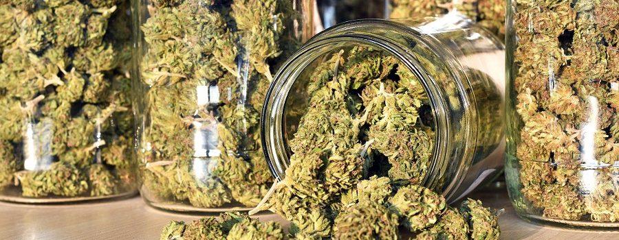 Bien conserver sa weed en préservant son arôme