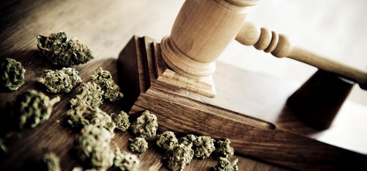France : l'amende forfaitaire pour les consommateurs de cannabis devant le conseil constitutionnel