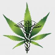 Le cannabis thérapeutique expérimenté en France dès 2019 ?