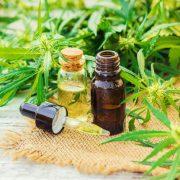 L'huile de cannabis : son utilisation, ses bienfaits