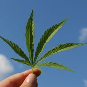 Mission d'information parlementaire sur le cannabis en France : les prémices d'un changement ?