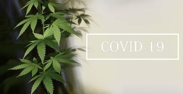 Covid19, confinement et cannabis