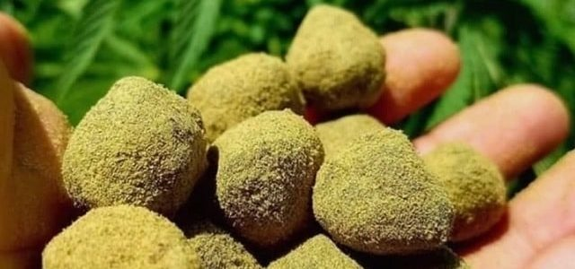 Moonrocks, Sunrocks : les têtes de cannabis les plus puissantes du monde