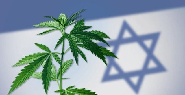 Plant Cannabis Drapeau Israelien