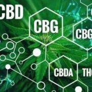 Qu'est-ce que le CBG (cannabigérol)?