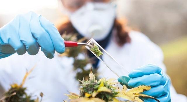 Le décret autorisant l'expérimentation du cannabis thérapeutique enfin publié