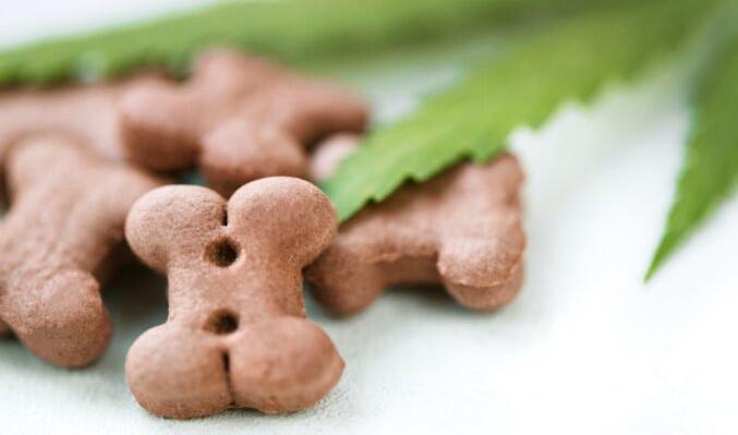 Biscuits CBD pour chiens